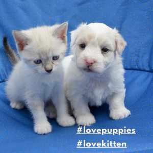 Special trending hashtag- #lovepuppies #lovekittens